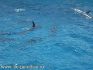 Дельфины, Красное море