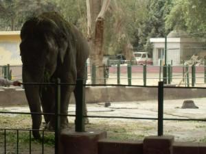 Библейский зоопарк, Иерусалим фото картинки