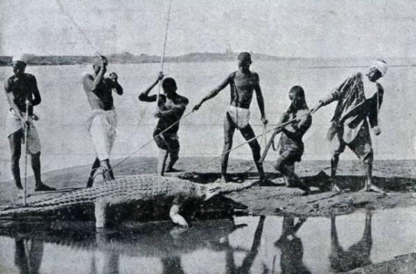 Знаменитые крокодилы Нила. Фото