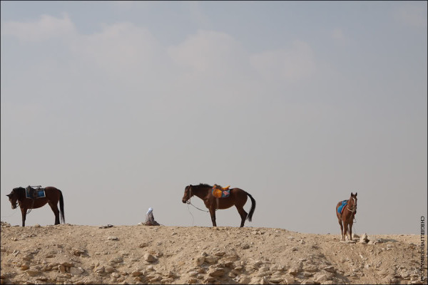 20110113_IMG_8257_Egypt_2011