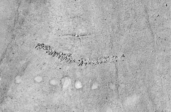 геоглифы в перу
