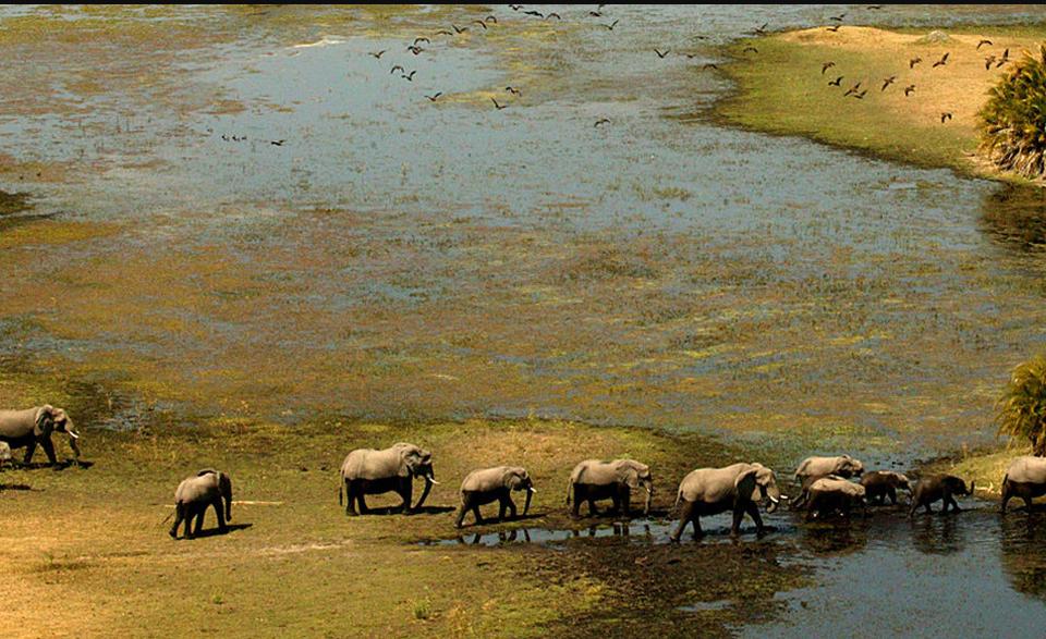 Саванна Великого Зимбабве