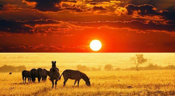 Туры с сафари в Кению