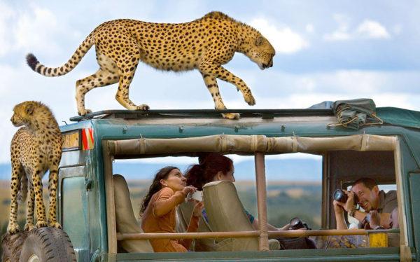Кения сафари туры